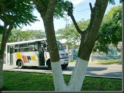 bus79avia